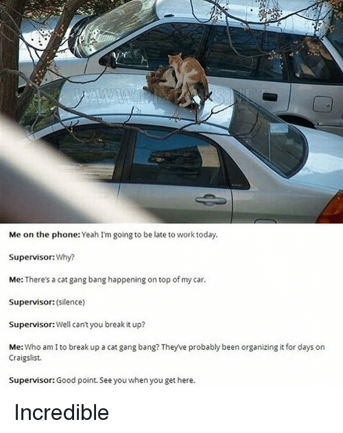 Gangbangers: Me on the phone  Yeah I'm going to be late to work today.  Supervisor:  Why?  Me: There's a cat gangbang happening on top of my car.  Supervisor:  (Silence)  Supervisor: Well can't you break it up?  Me: Who am I to break up a cat gang bang? Theyve probably been organizing it for days on  Craigslist.  Supervisor: Good point. See you when you get here. Incredible