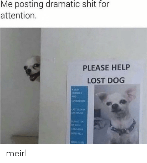 Help: Me posting dramatic shit for  attention.  PLEASE HELP  LOST DOG  AVERY  FRENDLY  AND  LOWNG DOG  LAST SEEN IN  MY HOUSE  PLEASE TEXT  OR CALL  123456765  M755-4321  DOGS KISSES meirl