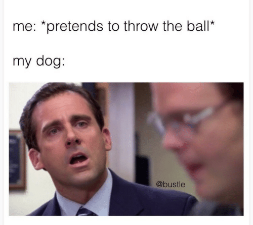 Dog, Ball, and  Throw: me: *pretends to throw the ball*  my dog:  @bustle