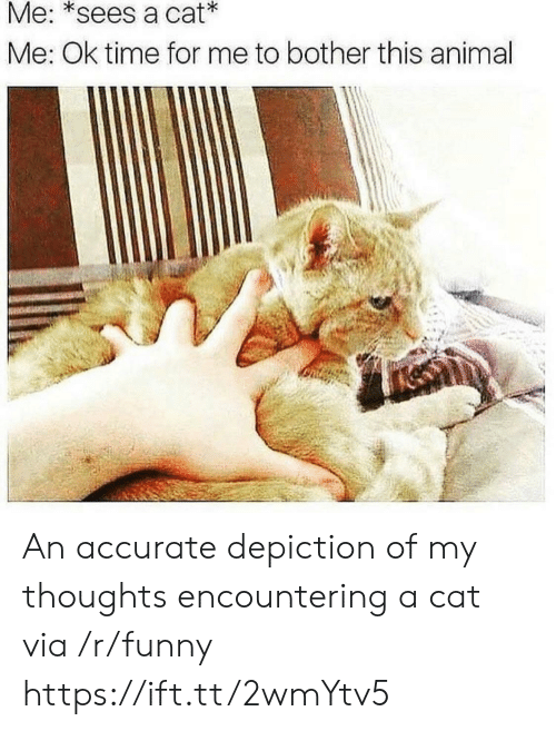 depiction: Me: *sees a cat  Me: Ok time for me to bother this animal An accurate depiction of my thoughts encountering a cat via /r/funny https://ift.tt/2wmYtv5