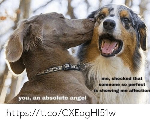 Memes, Angel, and 🤖: me, shocked that  someone so perfect  is showing me affection  you, an absolute angel https://t.co/CXEogHI51w