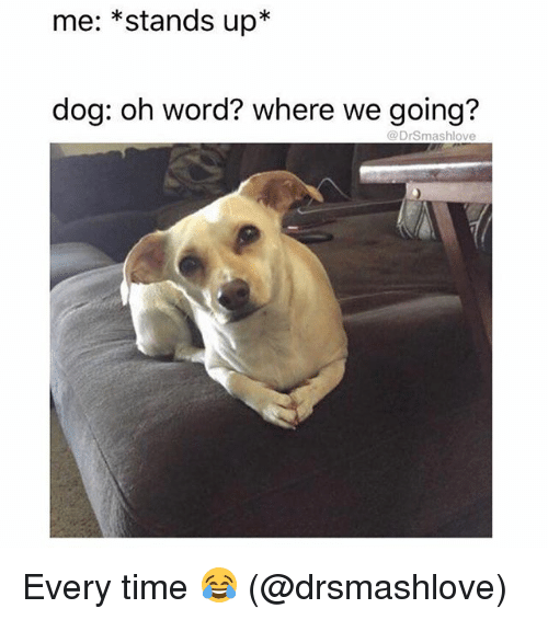 Memes, Time, and Word: me: *stands up*  dog: oh word? where we going?  @DrSmashlove Every time 😂 (@drsmashlove)