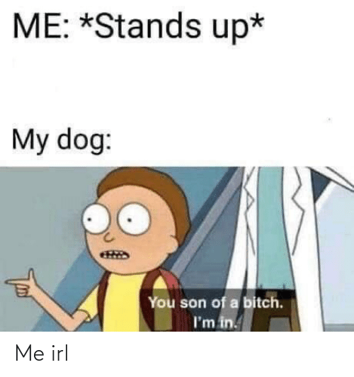 you son of a bitch: ME: *Stands up*  My dog:  You son of a bitch.  I'm in. Me irl