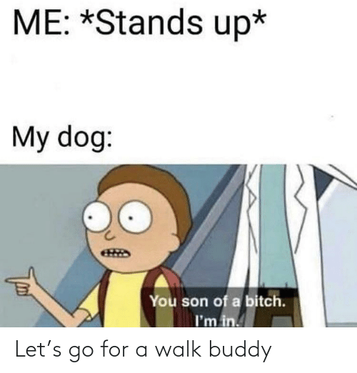 son of a bitch: ME: *Stands up*  My dog:  You son of a bitch.  I'm in. Let's go for a walk buddy