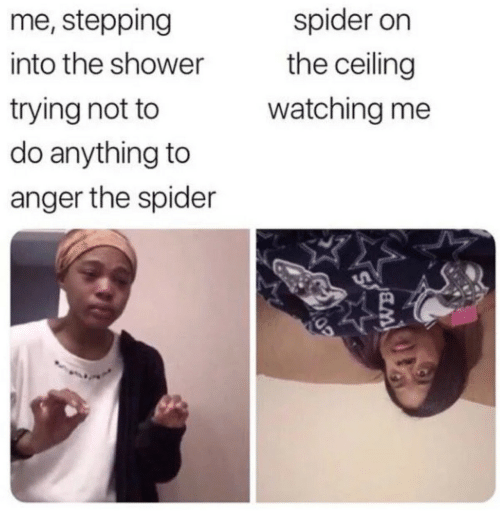 Shower, Spider, and Anger: me, stepping  spider on  the ceiling  into the shower  trying not to  do anything to  watching me  anger the spider