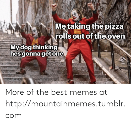 Memes, Pizza, and Tumblr: Me taking the pizza)  rolls out of the oven  Mydog thinking  hes gonna getone More of the best memes at http://mountainmemes.tumblr.com