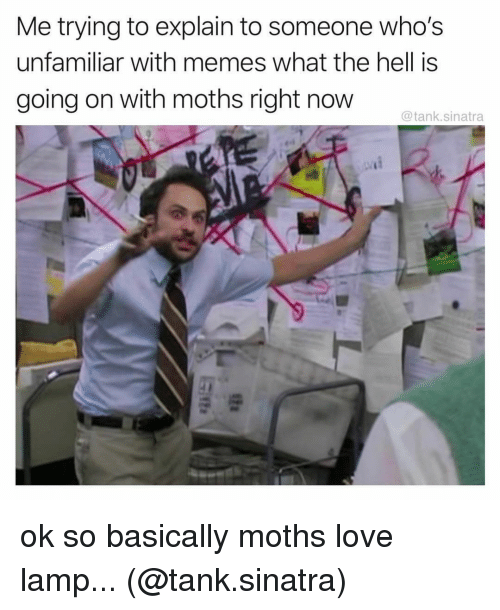 Memes What: Me trying to explain to someone who's  unfamiliar with memes what the hell is  going on with moths right now  @tank.sinatra ok so basically moths love lamp... (@tank.sinatra)