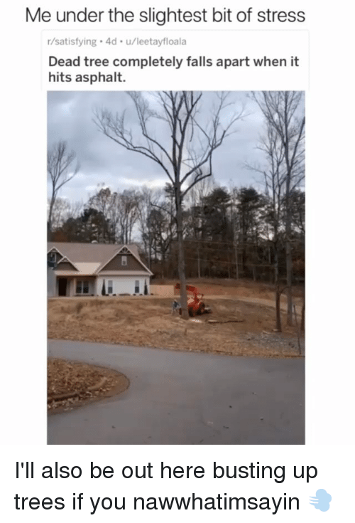 Memes, Tree, and Trees: Me under the slightest bit of stress  r/satisfying 4d u/leetayfloala  Dead tree completely falls apart when it  hits asphalt. I'll also be out here busting up trees if you nawwhatimsayin 💨