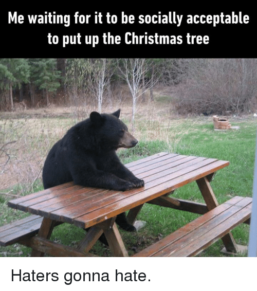 haters gonna hate: Me waiting for it to be socially acceptable  to put up the Christmas tree Haters gonna hate.