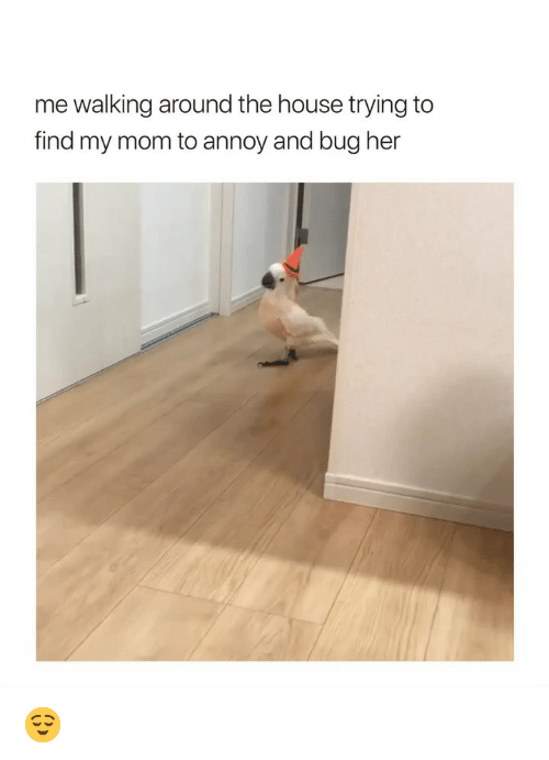 annoy: me walking around the house trying to  find my mom to annoy and bug her 😌