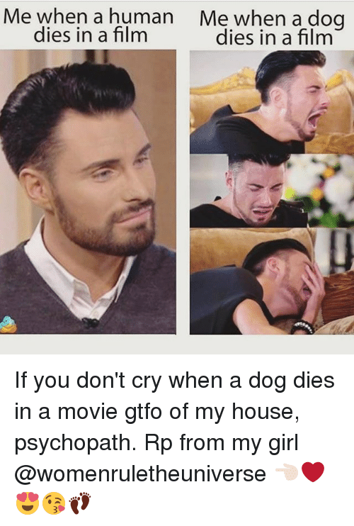psychopathic: Me when a human Me when a dog  dies in a film  dies in a film If you don't cry when a dog dies in a movie gtfo of my house, psychopath. Rp from my girl @womenruletheuniverse 👈🏻❤️😍😘👣