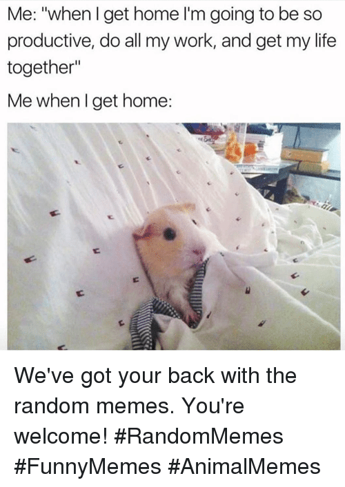 """got your back: Me: """"when I get home I'm going to be so  productive, do all my work, and get my life  together""""  Me when l get home: We've got your back with the random memes. You're welcome! #RandomMemes #FunnyMemes #AnimalMemes"""