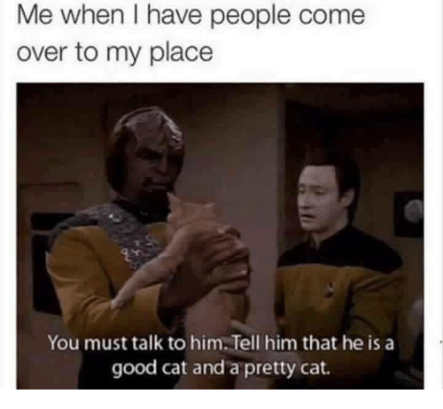 Good Cat
