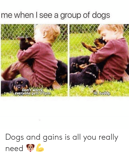 Turo: me when Il see a group of dogs  Don't worn  everyone gets a turo  Hi buddy Dogs and gains is all you really need 🐶💪