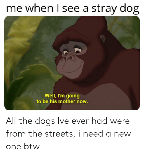 All The Dogs: me when l see a stray dog  Well, I'm going  to be his mother now All the dogs Ive ever had were from the streets, i need a new one btw