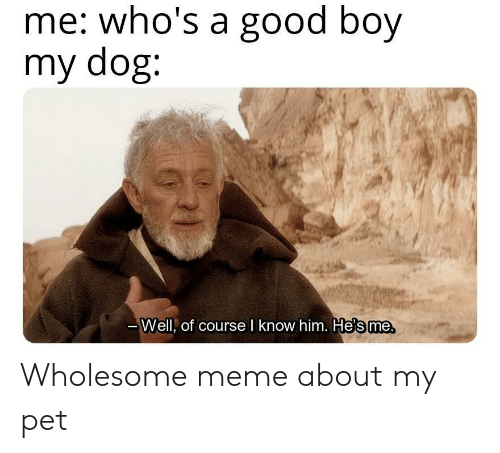 Meme, Good, and Wholesome: me: who's a good boy  my dog:  те.  Well, of course l know him. He's me Wholesome meme about my pet
