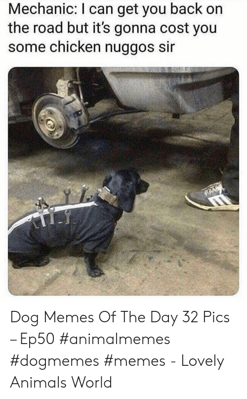 Animals, Memes, and Chicken: Mechanic: I can get you back on  the road but it's gonna cost you  some chicken nuggos sir Dog Memes Of The Day 32 Pics – Ep50 #animalmemes #dogmemes #memes - Lovely Animals World