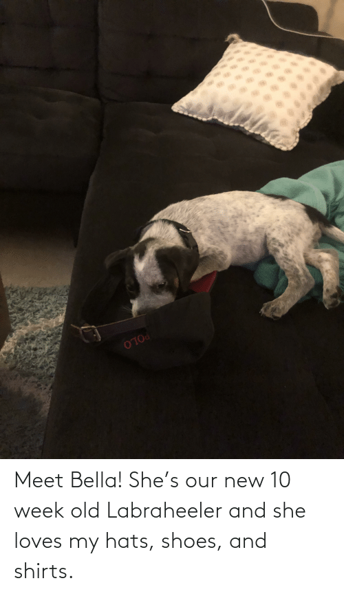 bella: Meet Bella! She's our new 10 week old Labraheeler and she loves my hats, shoes, and shirts.