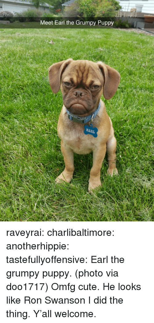 Ron Swanson: Meet Earl the Grumpy Puppy raveyrai:  charlibaltimore:   anotherhippie:   tastefullyoffensive:  Earl the grumpy puppy. (photo via doo1717)  Omfg cute.   He looks like Ron Swanson  I did the thing. Y'all welcome.