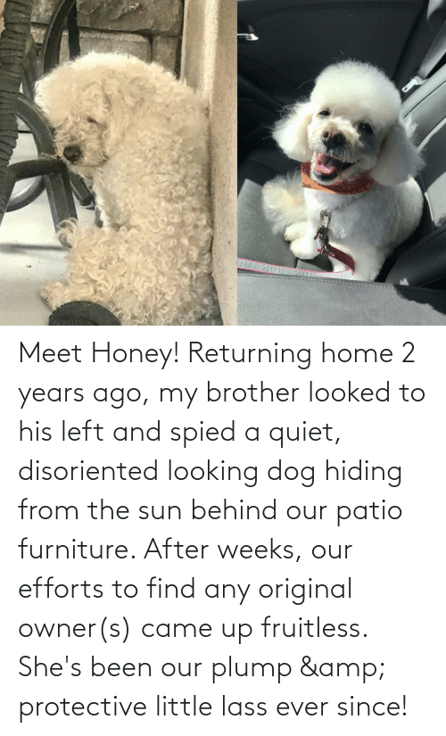 disoriented: Meet Honey! Returning home 2 years ago, my brother looked to his left and spied a quiet, disoriented looking dog hiding from the sun behind our patio furniture. After weeks, our efforts to find any original owner(s) came up fruitless. She's been our plump & protective little lass ever since!