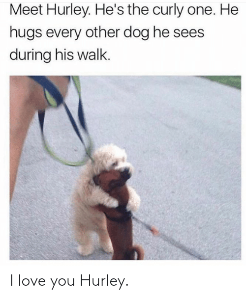 Dank, Love, and I Love You: Meet Hurley. He's the curly one. He  hugs every other dog he sees  during his walk. I love you Hurley.