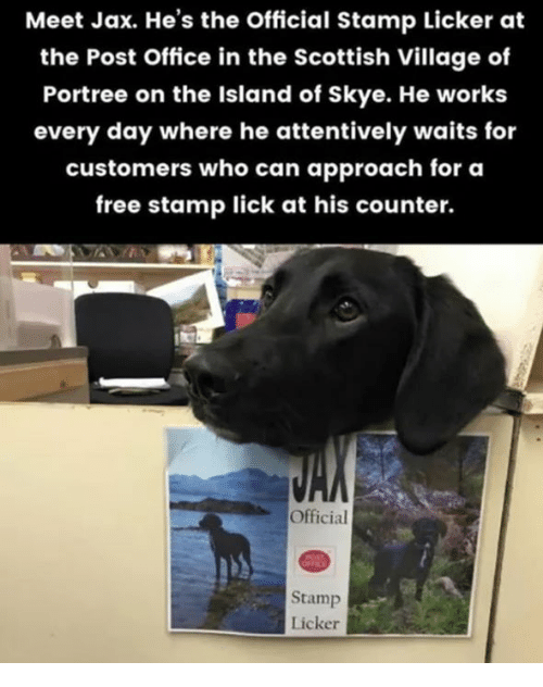 post office: Meet Jax. He's the Official Stamp Licker at  the Post Office in the Scottish Village of  Portree on the Island of Skye. He works  every day where he attentively waits for  customers who can approach for a  free stamp lick at his counter.  Official  Stamp  Licker