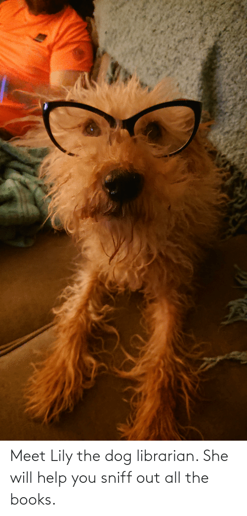 librarian: Meet Lily the dog librarian. She will help you sniff out all the books.