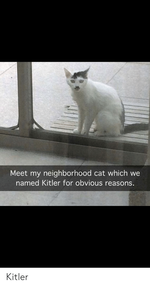 Cat, For, and Kitler: Meet my neighborhood cat which we  named Kitler for obvious reasons. Kitler