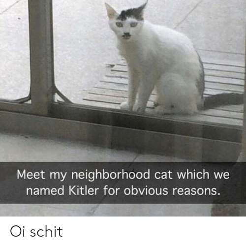 Cat, For, and Kitler: Meet my neighborhood cat which we  named Kitler for obvious reasons. Oi schit