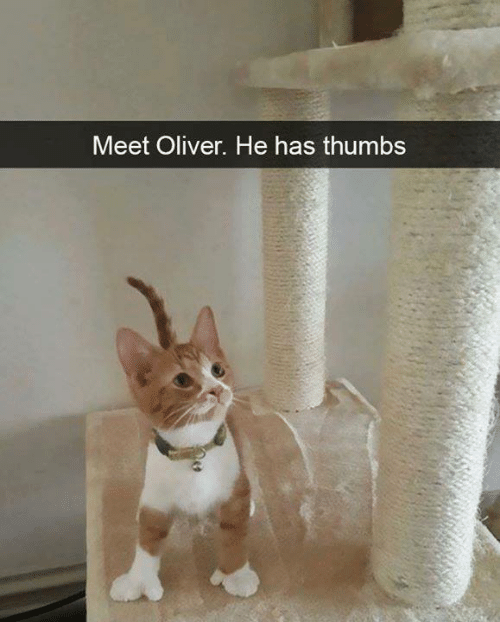 Oliver: Meet Oliver. He has thumbs