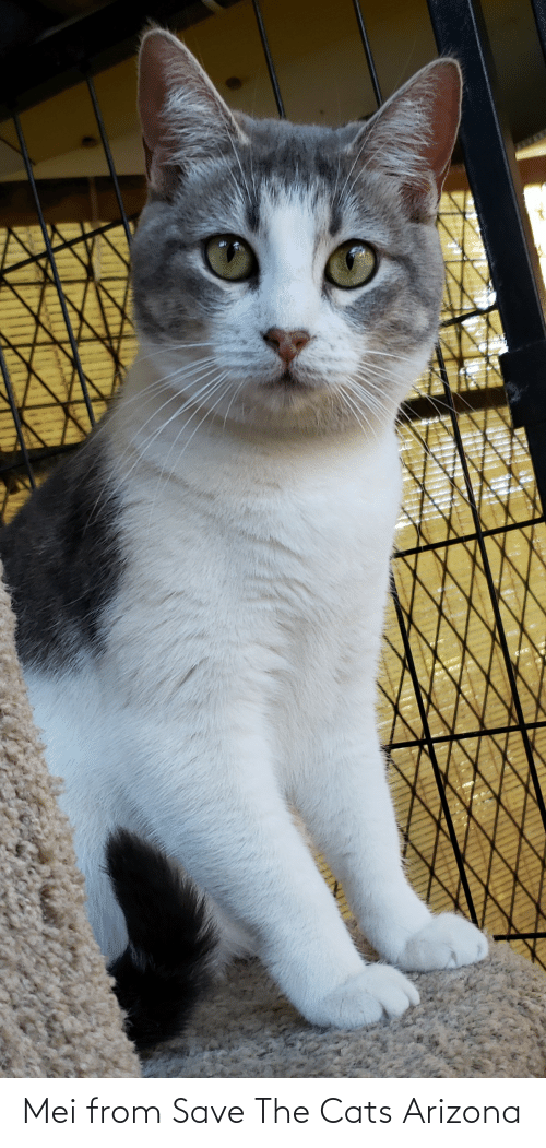 mei: Mei from Save The Cats Arizona