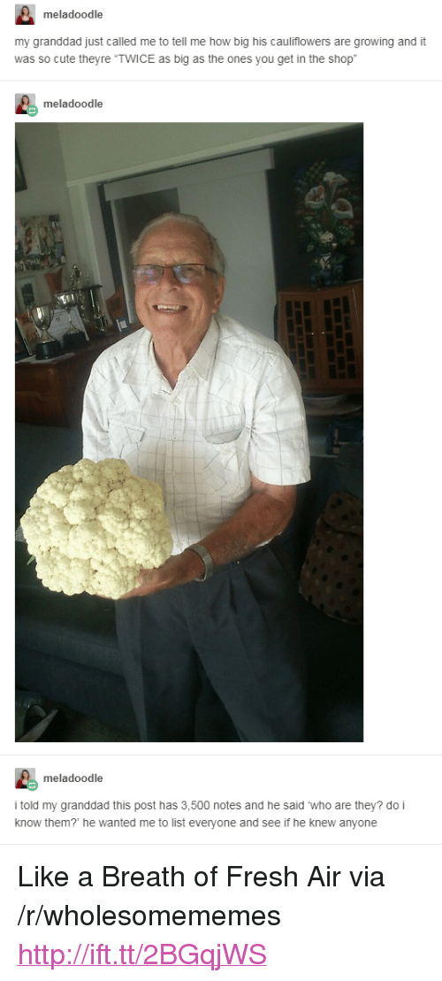 """Breath Of Fresh Air: meladoodle  my granddad just called me to tell me how big his cauliflowers are growing and it  was so cute theyre """"TWICE as big as the ones you get in the shop  meladoodle  meladoodle  i told my granddad this post has 3,500 notes and he said who are they? do i  know them? he wanted me to list everyone and see if he knew anyone <p>Like a Breath of Fresh Air via /r/wholesomememes <a href=""""http://ift.tt/2BGqjWS"""">http://ift.tt/2BGqjWS</a></p>"""