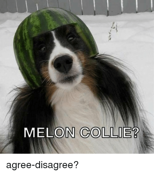 Memes, 🤖, and Melon: MELON COLLIE? agree-disagree?