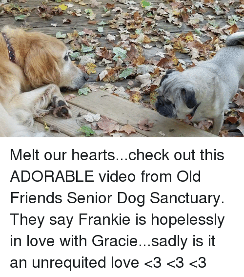 Dogs, Friends, and Love: Melt our hearts...check out this ADORABLE video from Old Friends Senior Dog Sanctuary. They say Frankie is hopelessly in love with Gracie...sadly is it an unrequited love <3 <3 <3