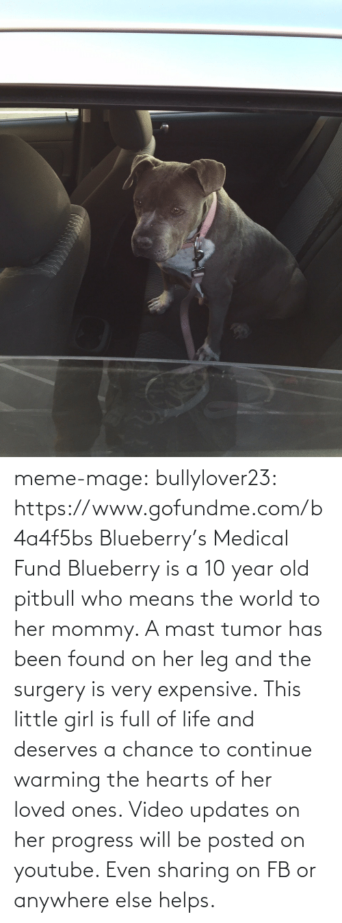 Anywhere Else: meme-mage:  bullylover23:  https://www.gofundme.com/b4a4f5bs         Blueberry's Medical Fund      Blueberry is a 10 year old pitbull who means the world to her mommy. A mast tumor has been found on her leg and the surgery is very expensive. This little girl is full of life and deserves a chance to continue warming the hearts of her loved ones. Video updates on her progress will be posted on youtube. Even sharing on FB or anywhere else helps.
