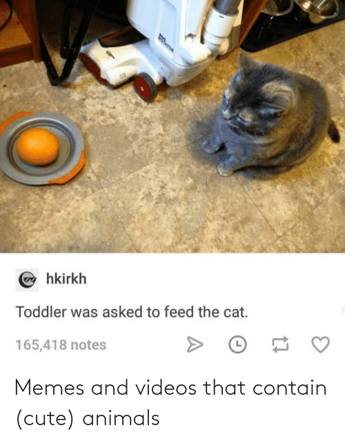 cute: Memes and videos that contain (cute) animals
