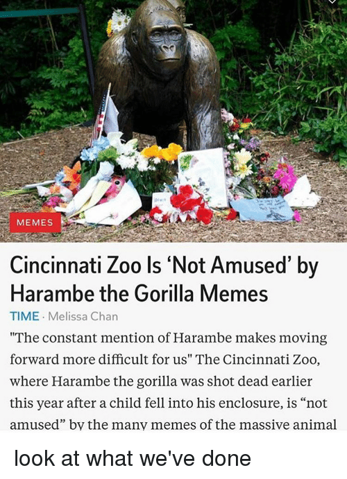 "Animals, Anime, and Dank: MEMES  Cincinnati Zoo Is Not Amused' by  Harambe the Gorilla Memes  TIME. Melissa Chan  ""The constant mention of Harambe makes moving  forward more difficult for us"" The Cincinnati Zoo,  where Harambe the gorilla was shot dead earlier  this year after a child fell into his enclosure, is ""not  amused"" by the many memes of the massive animal look at what we've done"