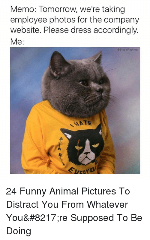 accordingly: Memo: Tomorrow, we're taking  employee photos for the company  website. Please dress accordingly.  Me:  @StupidResumes  HATE 24 Funny Animal Pictures To Distract You From Whatever You're Supposed To Be Doing