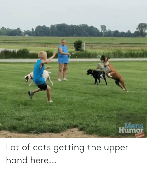 Cats, Dank, and Videos: Men's  Humor  FUNNEST  VIDEOS Lot of cats getting the upper hand here...