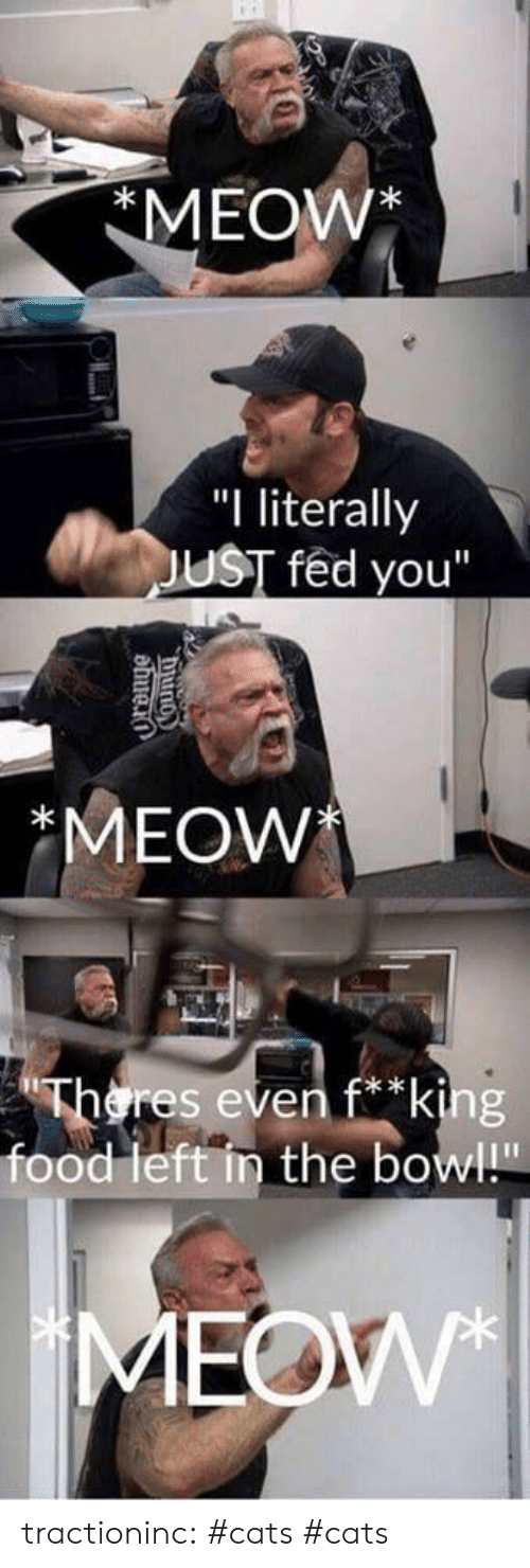 """Cats, Food, and Tumblr: MEOW*  """"I literally  JUST fed you""""  *MEOW  Theres even f*king  food left in the bowl!""""  MEOW  County tractioninc:  #cats  #cats"""