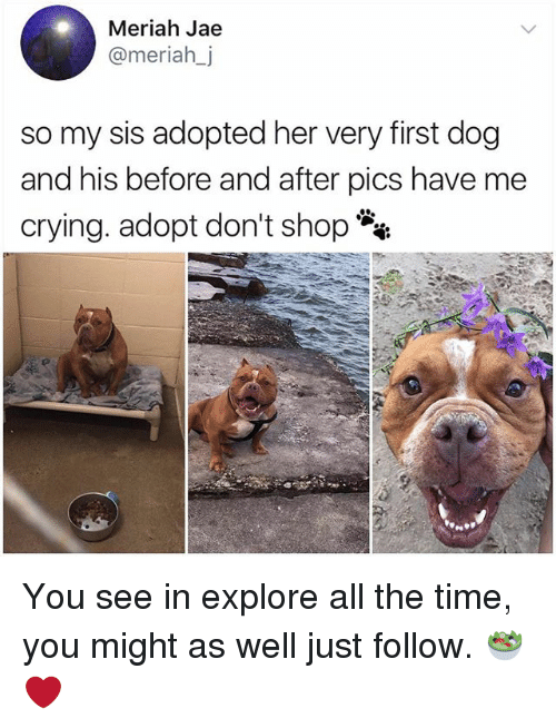 Crying, Memes, and Time: Meriah Jae  @meriah_j  so my sis adopted her very first dog  and his before and after pics have me  crying. adopt don't shop You see in explore all the time, you might as well just follow. 🥗❤️
