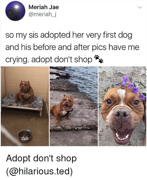 Crying, Dogs, and Funny: Meriah Jae  @meriahj  so my sis adopted her very first dog  and his before and after pics have me  crying. adopt don't shop Adopt don't shop (@hilarious.ted)