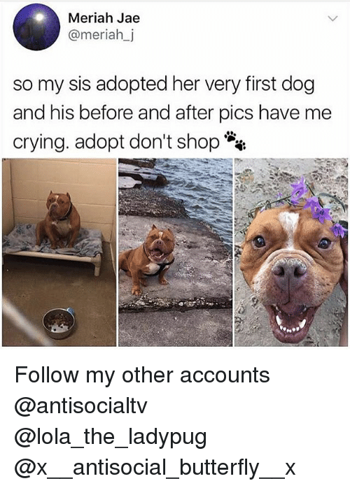 Crying, Memes, and Butterfly: Meriah Jae  @meriahj  so my sis adopted her very first dog  and his before and after pics have me  crying. adopt don't shop Follow my other accounts @antisocialtv @lola_the_ladypug @x__antisocial_butterfly__x