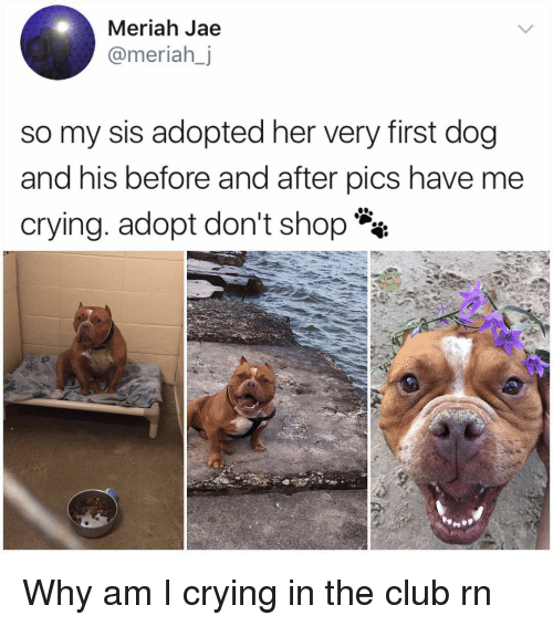 Club, Crying, and Memes: Meriah Jae  @meriahj  so my sis adopted her very first dog  and his before and after pics have me  crying. adopt don't shop** Why am I crying in the club rn