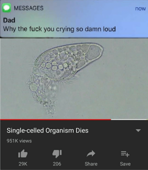 Crying, Dad, and Fuck You: MESSAGES  now  Dad  Why the fuck you crying so damn loud  Single-celled Organism Dies  951K views  Share  206  29K  Save