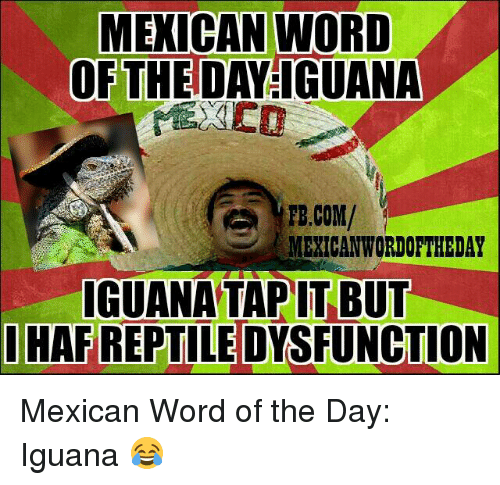 Mexican Wordoftheday: MEXICAN WORD  OF THE DAVIGUANA  FB.COM/  MEXICAN WORDOFTHEDAY  IGUANA TAP IT BUT  I HAFREPTILEDYSFUNCTION Mexican Word of the Day: Iguana 😂