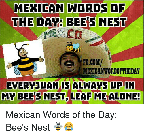 Mexican Wordoftheday: MEXICAN WORDS OF  THE DAY: BEES NEST  FB.COM/  MEXICAN WORDOFTHEDAY  EVERY JUAN IS ALWAYS UP IN  MY BEERS NEST LEAF ME ALONE! Mexican Words of the Day: Bee's Nest 🐝😂