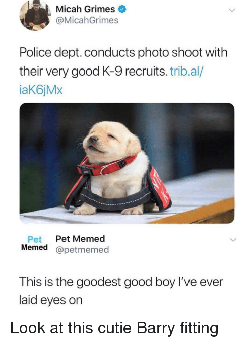 Memed: Micah Grimes  @MicahGrimes  Police dept. conducts photo shoot with  their very good K-9 recruits. trib.al/  aK6jMx  Pet Pet Memed  Memed @petmemed  This is the goodest good boy l've ever  laid eyes on Look at this cutie Barry fitting