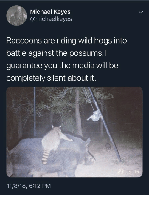 raccoons: Michael Keyes  @michaelkeyes  Raccoons are riding wild hogs into  battle against the possums.  guarantee you the media will be  completely silent about it.  14  11/8/18, 6:12 PM