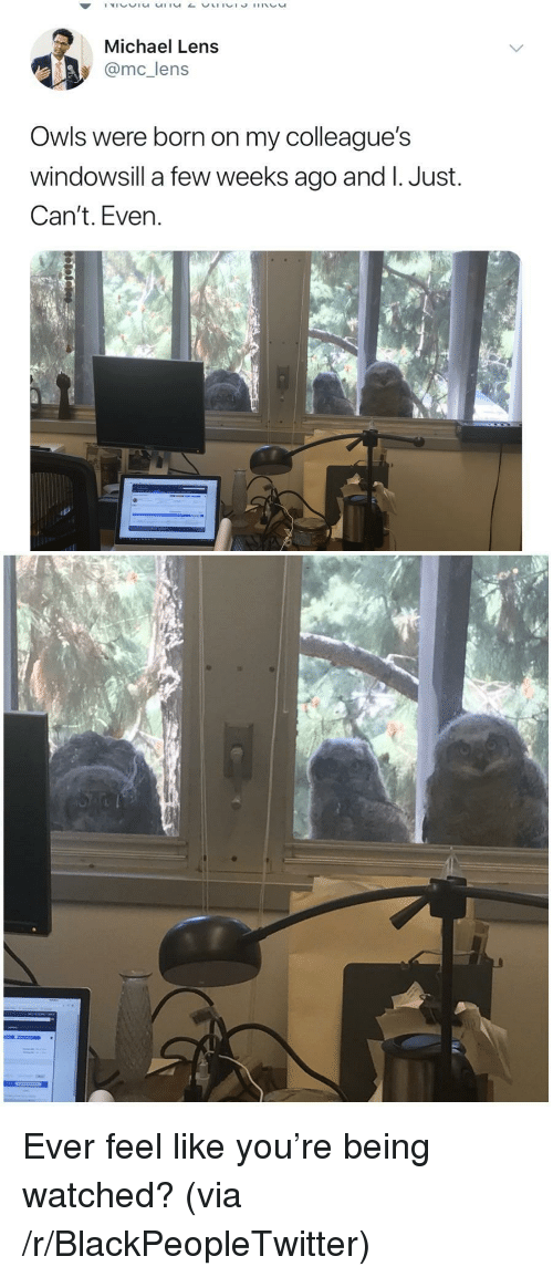 Just Cant Even: Michael Lens  @mc_lens  Owls were born on my colleague's  windowsill a few weeks ago and I. Just.  Can't. Even. <p>Ever feel like you&rsquo;re being watched? (via /r/BlackPeopleTwitter)</p>